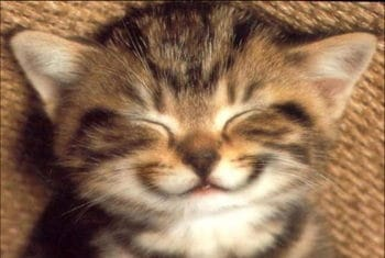 Sourire Chat